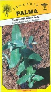 Blahovičník kulatoplodý - Eucaliptus globulus
