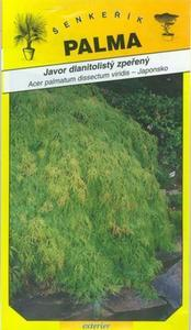 Javor dlaňolistý sperené - Acer palmathum dissec