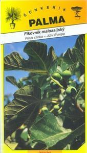 Fíkovník maloasijský - Ficus carica
