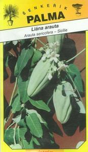 Liána arauta - arauta sericofera