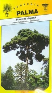 Borovice alepská - Pinus halepensis