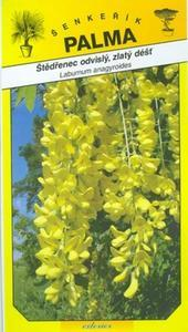 Štědřenec odvislý, zlatý déšť - Laburnum anagyroid