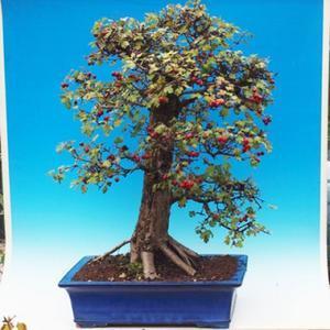 Vonkajšie bonsai - hloh VB30215