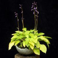 Kusamono - Doplňkové rostliny