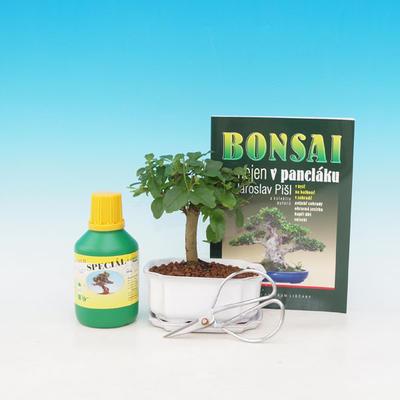 Bonsai v dárkové sadě