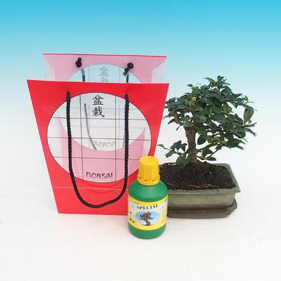 Izbová bonsai v darčekovej taške