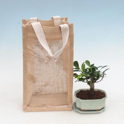 Pokojová bonsai v dárkové tašce - JUTA, Fíkusy-Ficus retusa