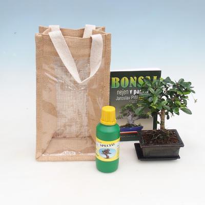 Pokojová bonsai v dárkové tašce - JUTA