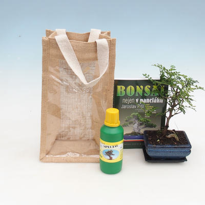 Pokojová bonsai v dárkové tašce - JUTA, Zantoxylum piperitum - Pepřovník