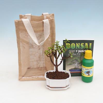 Pokojová bonsai v dárkové tašce - JUTA, Portulakaria Afra - Tlustice
