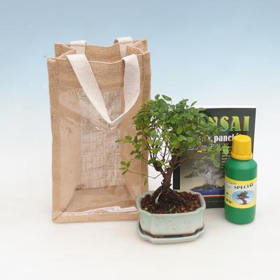 Pokojová bonsai v dárkové tašce - JUTA, Sagerecie čajová - Sageretia thea