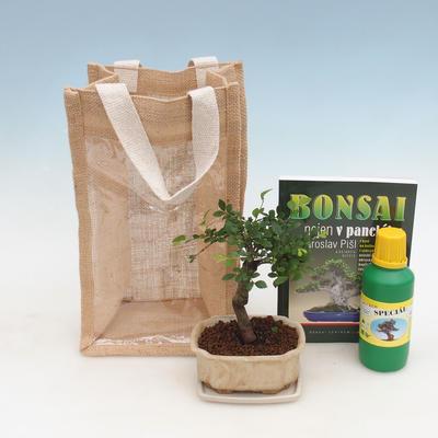 Pokojová bonsai v dárkové tašce - JUTA, Ulmus parvifolia-Pokojový jilm