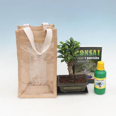 Pokojová bonsai v dárkové krabičce, Fíkusy-Ficus retusa