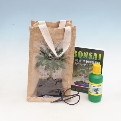 Pokojová bonsai v dárkové tašce - JUTA - 1