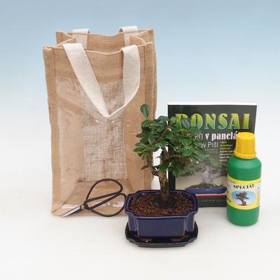 Pokojová bonsai v dárkové tašce - JUTA, Carmona-čaj fuki