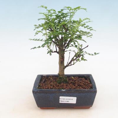 Keramická bonsai miska 21,5 x 21,5 x 6,5 cm, barva hnědá - 1