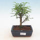 Keramická bonsai miska 21,5 x 21,5 x 6,5 cm, barva hnědá - 1/3