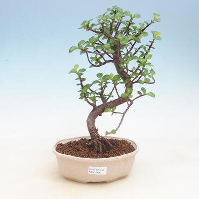 Keramická bonsai miska 24 x 24 x 7,5 cm, barva béžová - 1