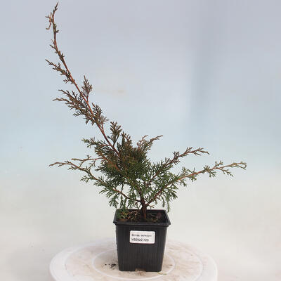 Bonsai miska 31 x 24 x 10 cm, barva béžová - 1