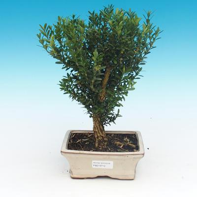 Keramická bonsai miska - páleno v plynové peci 1240 °C - 1