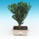 Keramická bonsai miska - páleno v plynové peci 1240 °C - 1/4