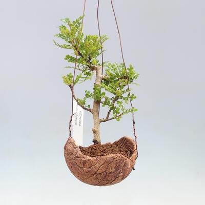 Bonsai miska 30 x 23 x 8,5 cm, barva šedobéžová - 1