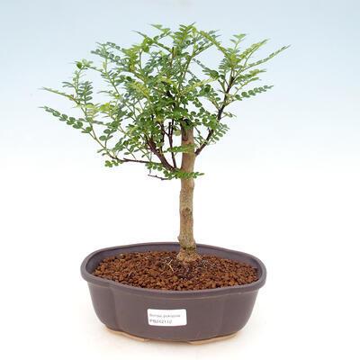 Bonsai miska 26,5 x 19,5 x 8 cm, barva šedá - 1