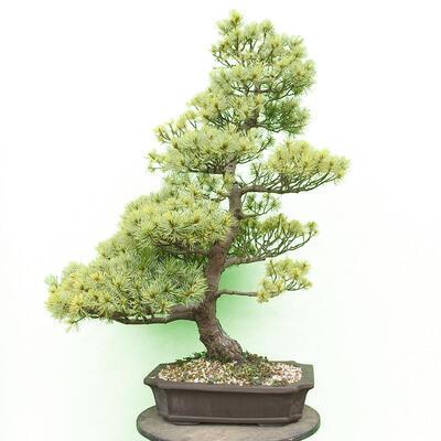 Bonsai miska 30,5 x 23,5 x 9,5 cm, barva šedá - 1