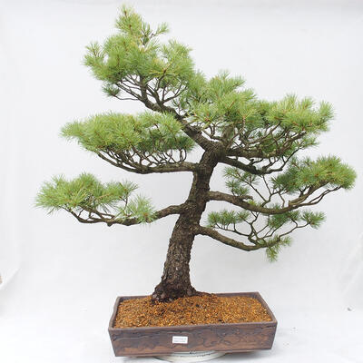 Bonsai miska 22,5 x 17 x 7 cm, barva šedobéžová - 1