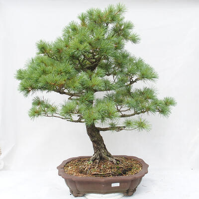 Bonsai miska 22 x 17 x 7 cm, barva šedobéžová - 1