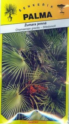 Žumara jemná - chamaerops gracilis