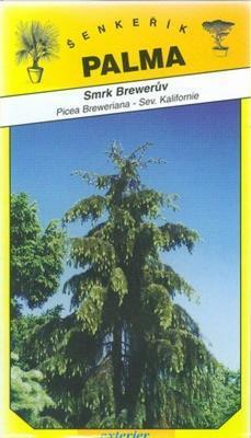 Smrek Brewerův - Picea Breweriana