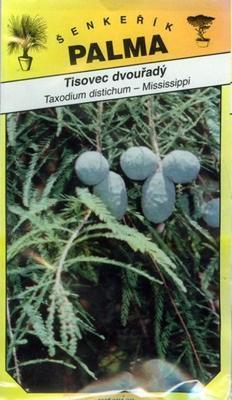 Tisovec dvouřadý - Taxodium distichum