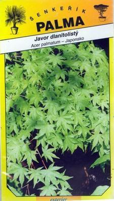 Javor dlaňolistý - Acer palmatum