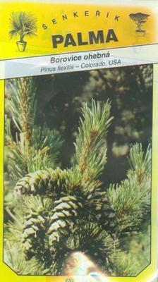 Borovica ohybná - Pinus flexilis