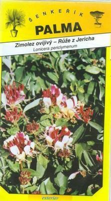Zimolez ovíjivý ( ruže z Jericha) - Lonicera peric