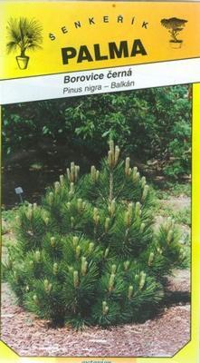 Borovica čierna - Pinus nigra