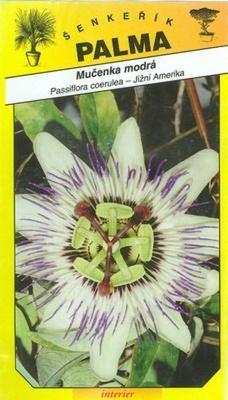 Mučenka modrá -Passiflora coerulea