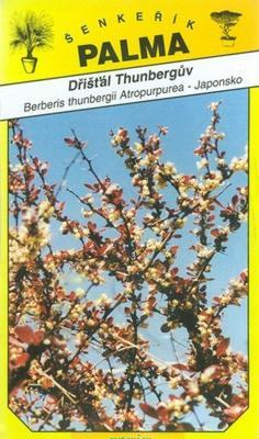 Dřišťál Thunbergův - Berberis thunbergii At.