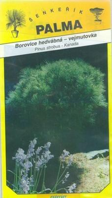 Borovica hodvábna vejmutovka - Pinus strobus