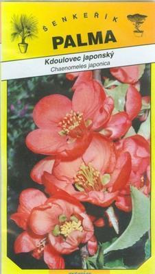 Kdoulovec japonský - Chaenomeles japonica