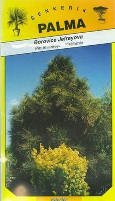 Borovice Jefreyova - Pinus Jefreyi