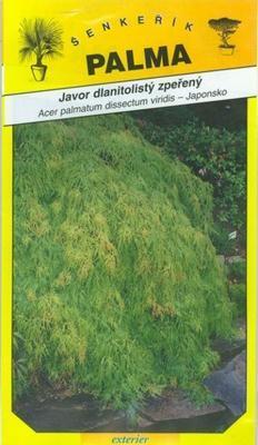 Javor dlanitolistý zpeřený - Acer palmathum dissec