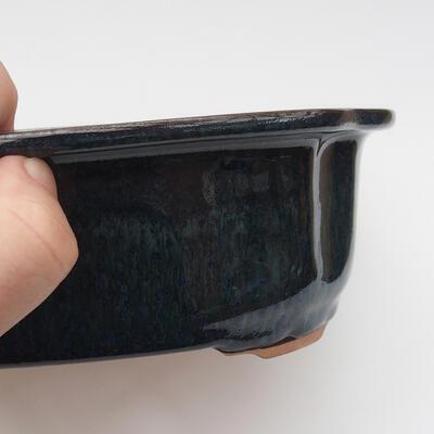 Venkovní  bonsai -  Pseudocydonia sinensis - Kdouloň čínská - 2