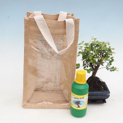 Pokojová bonsai v dárkové tašce - JUTA - 2