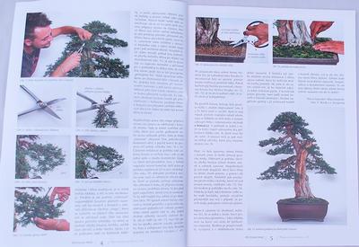 Bonsaje a Japonské zahrady č.48 - 2