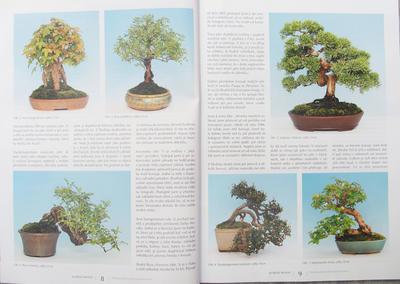 Bonsaje a Japonské zahrady č.51 - 2