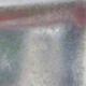 Venkovní bonsai -Carpinus CARPINOIDES - Habr korejský - 2/4
