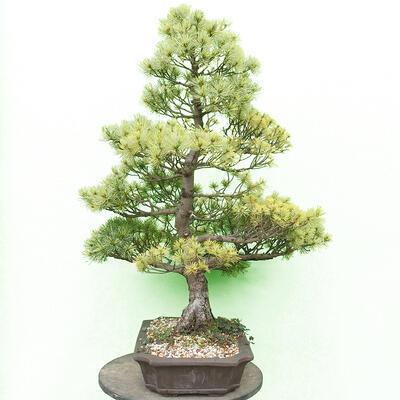 Bonsai miska 30 x 23 x 8,5 cm, barva šedobéžová - 2