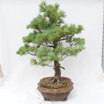 Bonsai miska 34,5 x 26 x 9 cm, barva šedá - 2